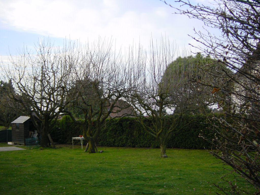 Arbres fruitiers - Taille arbre fruitier ...